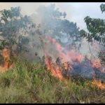 Lahan Gambut di Baula Kolaka Terbakar