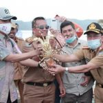 Konsel Dilirik Jadi Pusat Budidaya Lobster Nasional