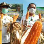 Stafsus Menteri Pertanian Lakukan Panen raya di Kendari