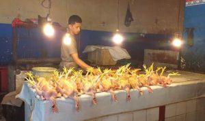 Harga Daging Ayam dan Sapi di Kendari Stabil