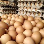 Harga Telur Ayam Ras di Kendari Rp 48 Ribu- Rp 55 Ribu