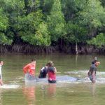 Ikan Mirip Hiu Muncul Perairan Jembatan Triping
