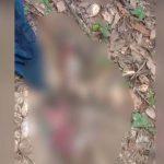 Warga Digegerkan Penemuan Mayat Bayi Perempuan di Kebun Raya UHO