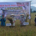 Wali Kota Panen Raya Beras Organik di Amohalo
